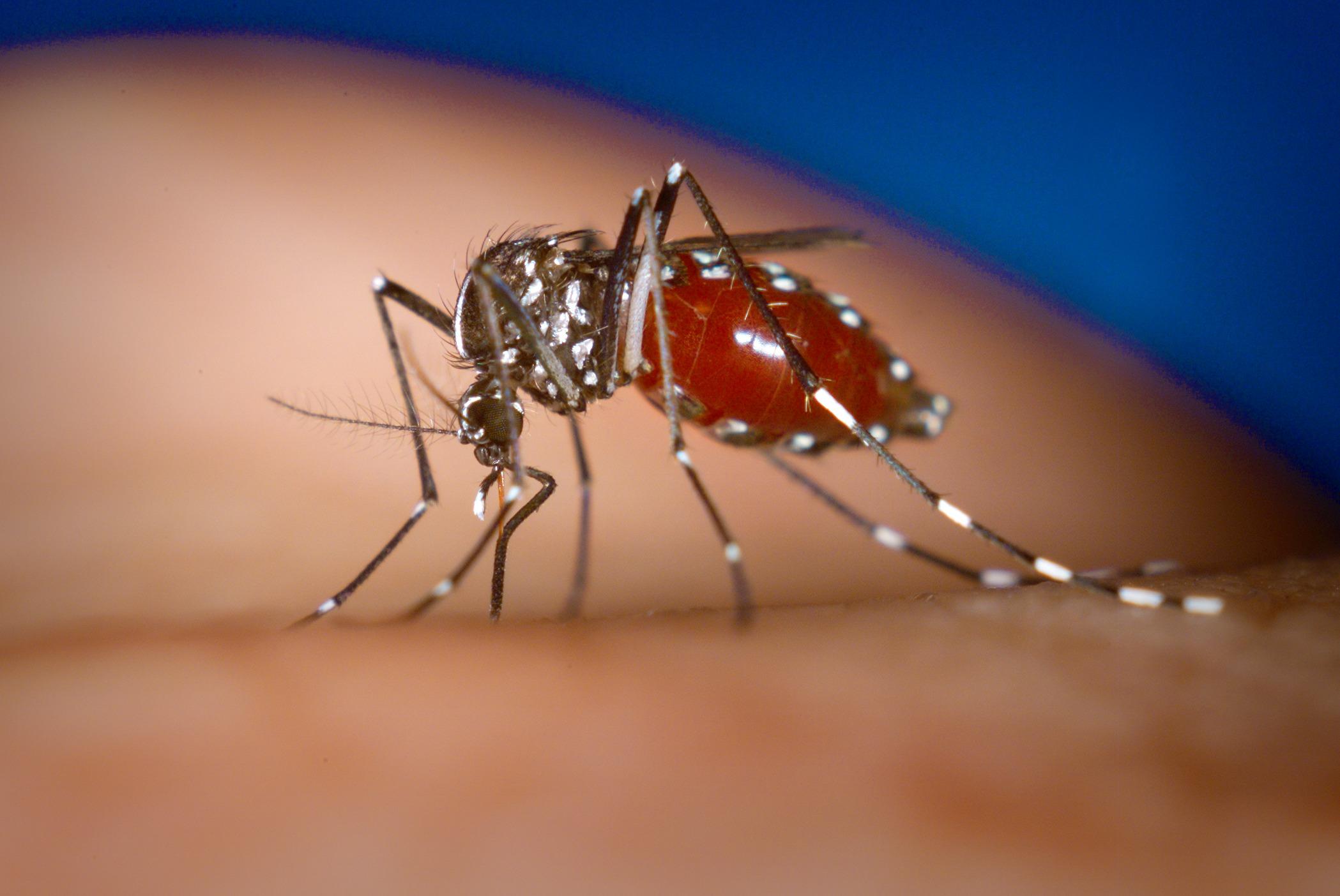 Sheila Marinho cobra medidas de combate ao Aedes Aegypti